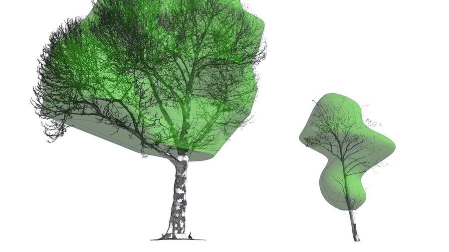 Tree Modelling
