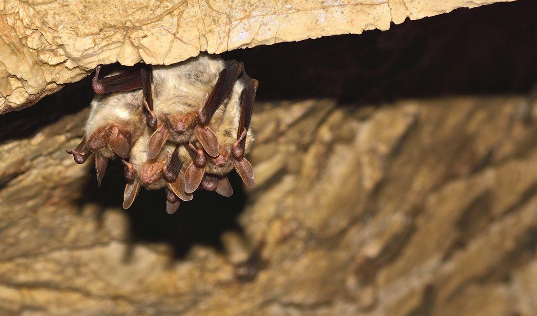 Pc Enviro Bats Ecology Shutterstock 555847315